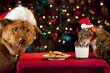 Cat And Dog Taking Over Santa'S Cookies And Milk