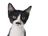 Cute Black And White Kitten With A Mustache