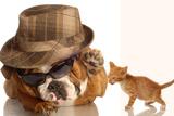 Bulldog Gangster With Kitten