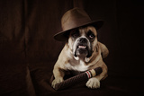 Bulldog With Hat And Cigar