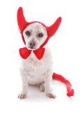 Bad Dog Halloween Devil Costume