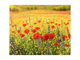 Sea Of Blossom Reproduction d'art par Kirilstanchev