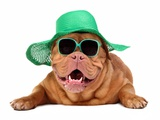 Dog Wearing Green Straw Hat And Sun Glasses  Isolated