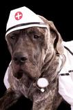 Nurse Puppy