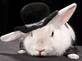 Portrait Of Cute Rabbit In Top Hat And Bow-Tie Isolated On Dark Background