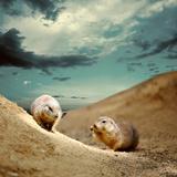 Marmot Under Sky