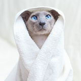 Hairless Cat In Towel