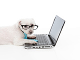 Business Or Educated Dog Using Compuer