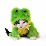 Kitten In Frog Suit