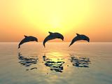 Jumping Dolphins Papier Photo par MIRO3D