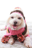 Happy Dog In Warm Woollen Sweater And Scarf