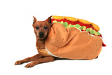 Funny Dog Dressed As A Hot Dog