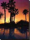 Arizona Palms I Tableau sur toile par AJ Messier