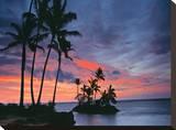 Barefoot Palms Tableau sur toile par AJ Messier