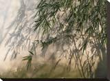 Bamboo Shadow
