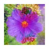 Viloet Blossom