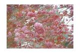 Poetic Cherry Tree Impession