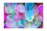 ORCHIDS IN BLUE AND PINK