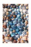 Seashell Puzzle I
