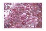 Poetic Spring