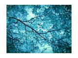 Eatheral Ice Blue Trees