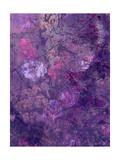 Purple Flower Forest