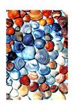 Seashell Puzzle II
