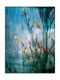 Underwatersky