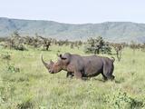 White Rhinoceros, Kenya Papier Photo par Martin Zwick
