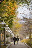 Autumn  Quebec City  Quebec  Canada