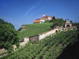 Vineyards at Burg Riegersburg  Styria  Austria