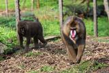 Mandrills at Limbe Wildlife Center  Limbe  Cameroon