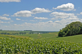 Corn Field  Nebraska  USA