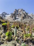 Central Mount Kenya National Park  Kenya