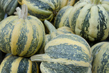 American Tondo Pumpkins  California  USA