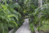 Pathway  Hemingway House  Hemingway Museum  Finca Vigia  Havana  Cuba