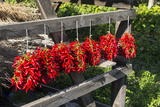 Red Hungarian Hot Chili Locally known as Paprika  Kalocsa  Hungary