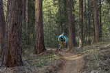 Mountain Biking on the Whitefish Trail  Montana  USA