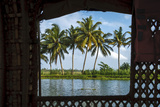 Coconut Trees Seen from Cruise Boat in Backwaters  Kerala  India