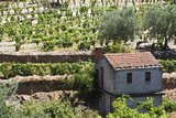 Vineyards of the Douro Valley  Pinhao  Portugal