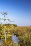 Sawgrass Highlighted in Light  Everglades National Park  Florida  USA