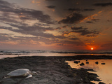 Green Sea Turtle at Sunset  Honokohau Bay  Hawaii  USA