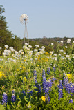 Wildflowers and Windmill in Texas Hill Country  Texas  USA