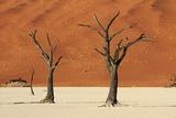 Dead Tree  Sand Dunes  Deadvlei  Namib-Naukluft National Park  Namibia