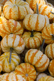 Ornamental Pumpkins  Avila Beach  California  USA