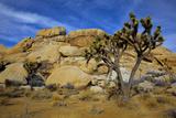 Jumbo Rocks  Joshua Tree National Park  California  USA