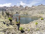 Lake  Mount Kenya National Park  Kenya