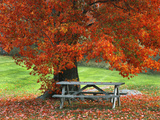 Bench under Maple in Autumn  West Park  New York City  USA