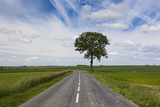 Road Through the Countryside  Beaumont  Somme  Picardy  France