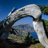 Curved Log Frames Crater Lake and the Watchman  Oregon  USA